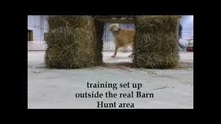 Barn Hunt & Tunnel Training At Brylin Obedience Specialty School