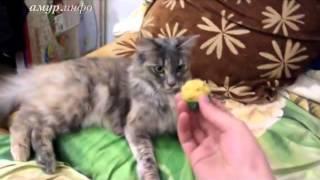 Котопёс Тося, или как дрессировать кошку