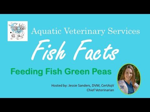Fish Facts - Feeding Fish Green Peas