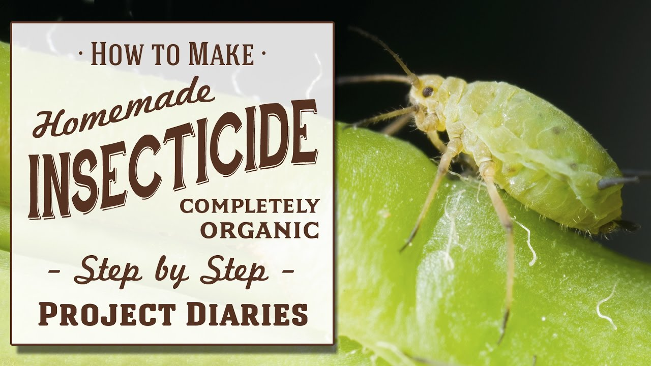 ☆ How to: Make Homemade Insecticide