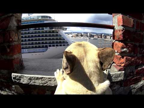 Visit Oslo with Einar The Frenchie! (Sony action cam)
