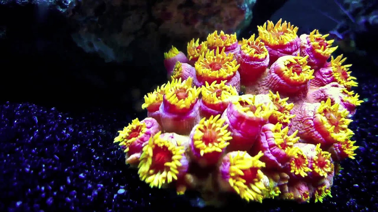 How To Make A Gif Your Wallpaper On Iphone Sun Polyps Corals Time Lapse Capture By Iphone 4 Youtube