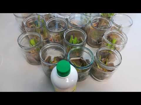 Вопрос: Как использовать средство Байкал при посадке и выращивании кустарников?