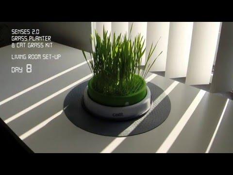 Catit Senses 2.0 Gras Topf - Zeitraffer