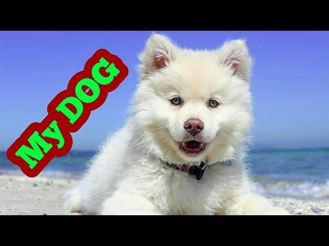 dog easy essay on dog kids bank  dog easy essay on dog kids bank