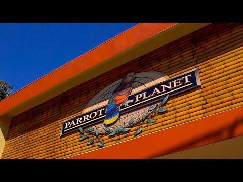 Parrot Planet October 12 2013- Sacramento, CA