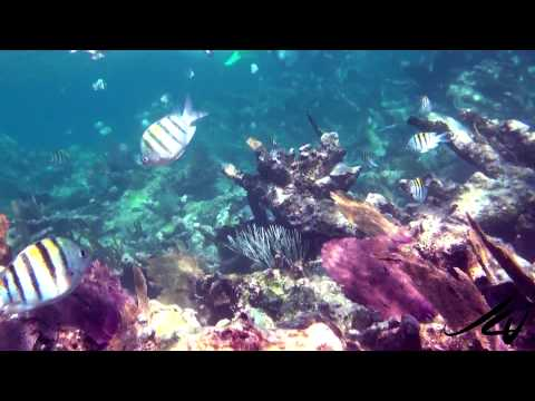 Colorful Tropical Fish Of The Reef - Snorkeling Mexico