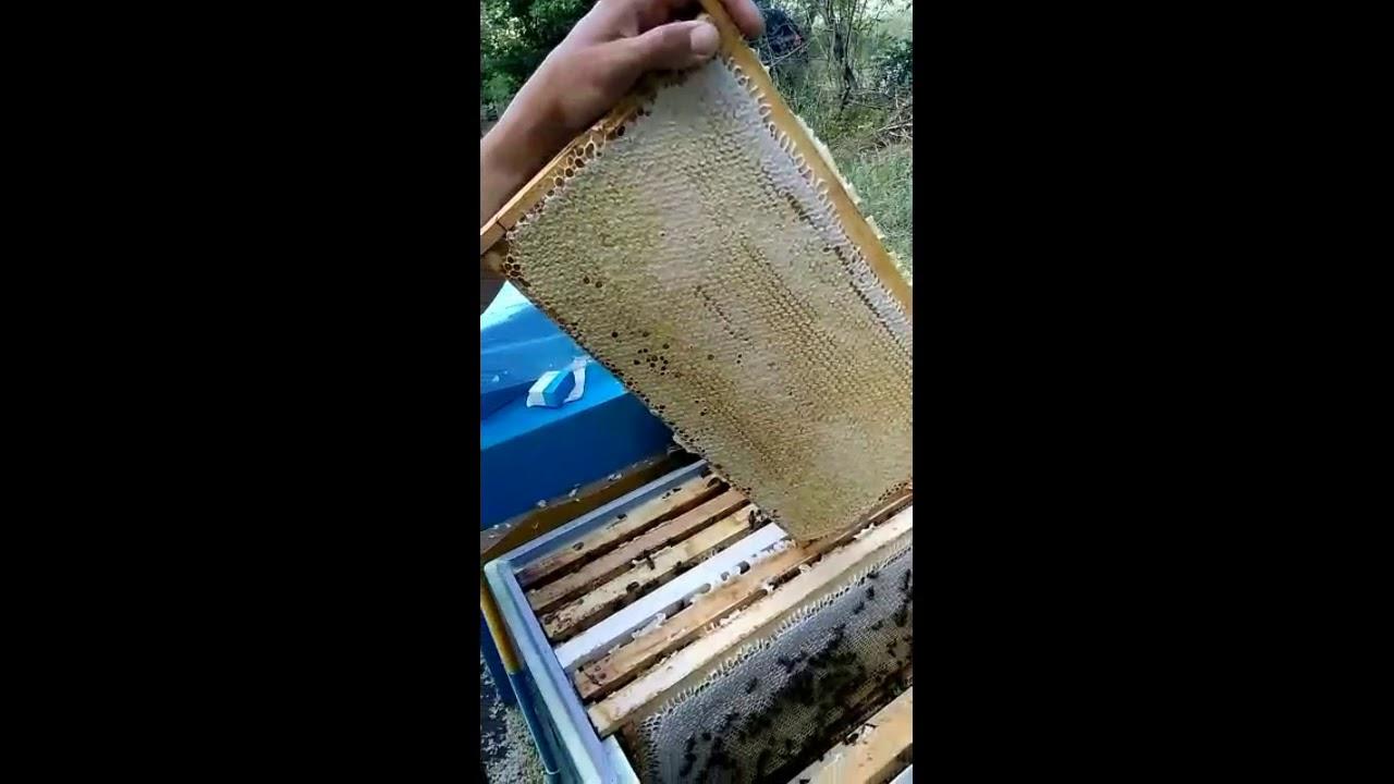 Портал для пчеловода всепасеки – купить и продать мёд оптом, купить пчел, пчелопакеты, пчеломатка цена, перга, маточное молочко, прополис. Продажа мёда в россии и странах снг.