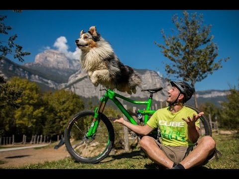 Six videos that will make you want a trail dog - MBR