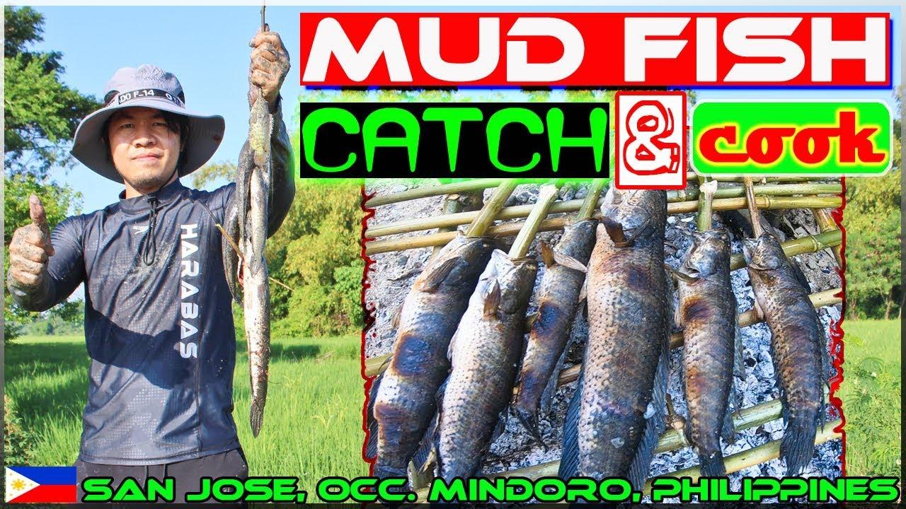 Harabas EP23 - Mud fish Catch and Cook {Paglimas at Pangangapa ng Dalag}