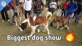 Ahmedabad Dog show / Overview 🔥🔥/ Biggest dog show / Dog channel