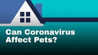 Coronavirus + Dogs: Can Coronavirus infect pets?