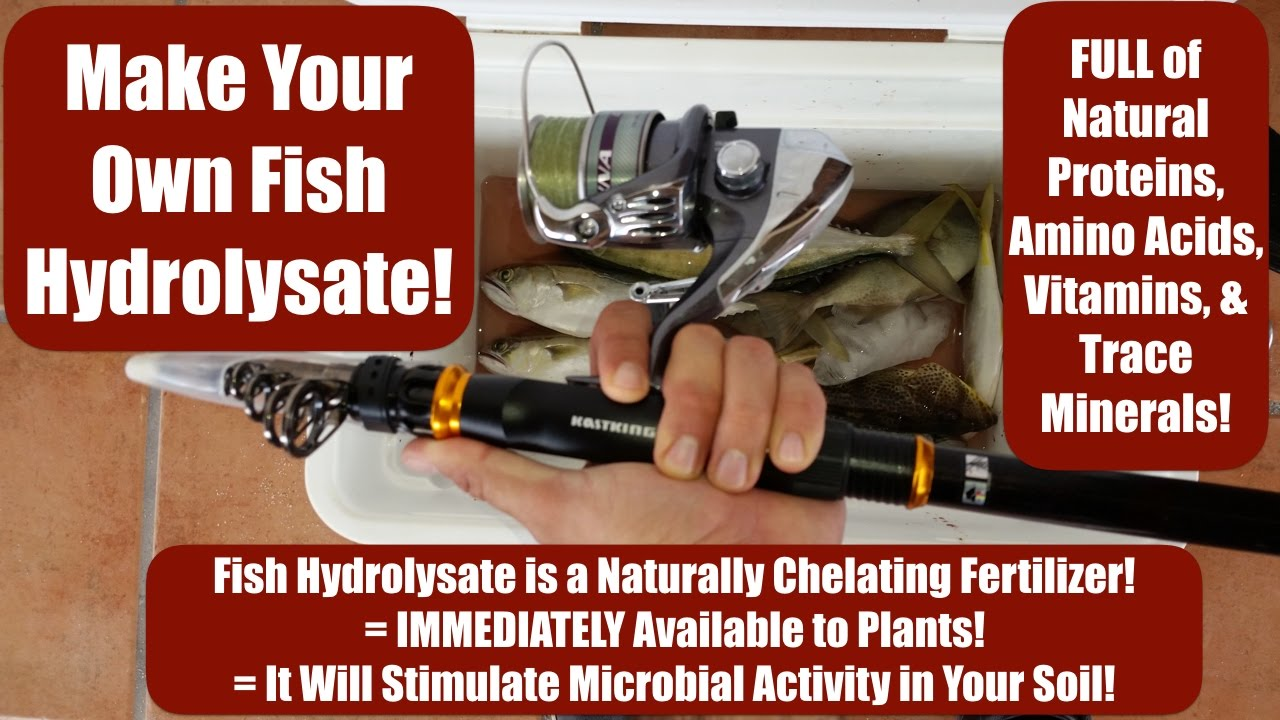 Make your own fish hydrolysate full of amino acids for Create your own fish