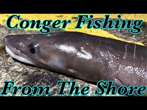 Shore Fishing - Catching Conger Eels In Guernsey UK