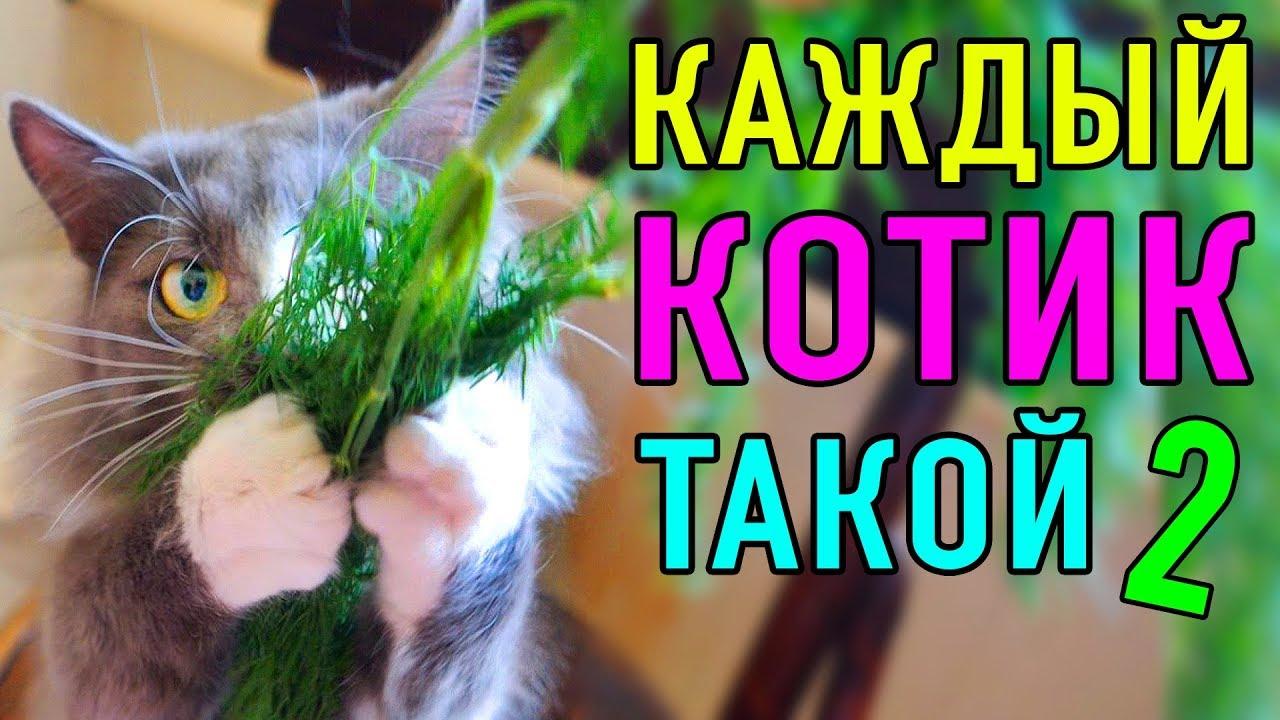 КАЖДЫЙ КОТИК ТАКОЙ 2 | ПАРОДИЯ Magic Pets