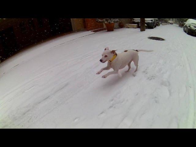 Thessaloniki Snow Lila the B.A.R.F Mini Dog