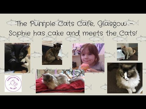 The Purrple Cats Cafe, Glasgow - Sophie has cake and meets the Cats!