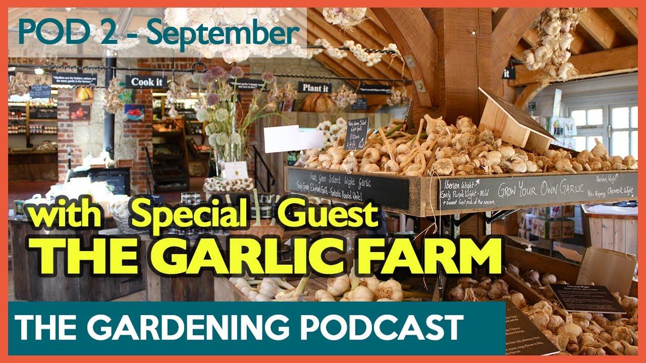 The Gardening Podcast 2: Garlic advice with The Garlic Farm | How to Grow Expert Garlic