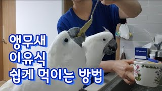 앵무새 이유식 먹이는 …