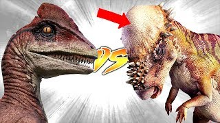 Pachycephalosaurus VS Deinonychus [Who Would Win?]