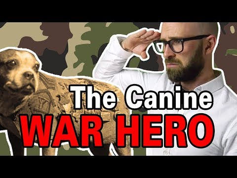 The Most Decorated Dog of WWI