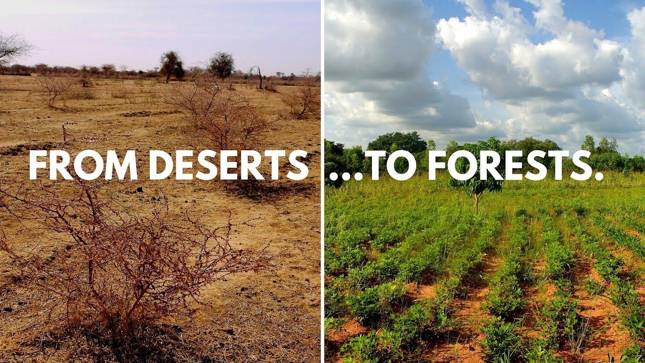 ecosia u0026 39 s planting sites in lilengo  burkina faso