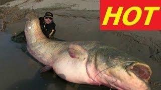 Fish Warrior Amazon Giant Fish National Geographic documentary 2017 animals hd full new