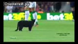 Чёрная кошка потерялась на футбольном матче