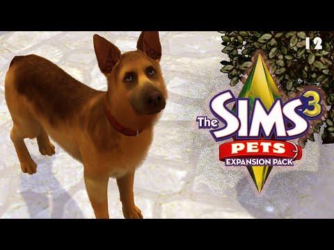 Вопрос: Как разводить животных в the Sims 3 Питомцы (ПК)?