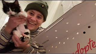I adopted two kittens! Vlog