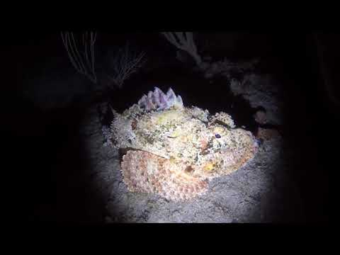 ADI Dives | Pompano Beach Night Dive, 3 31 18