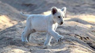 LES ANIMAUX D'AFRIQUE DU SUD (DOCUMENTAIRE ANIMALIER 2021)