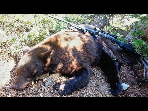 California Bear Hunt 2017 - 390 Yard Heart Shot - 7mm mag (GoPro)