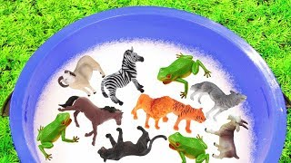 Animal Toys For Bath Time Learn Zoo Animals with Toys for Kids