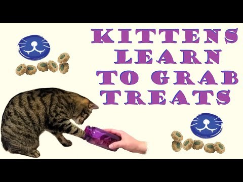 Kittens learn to grab treats from container
