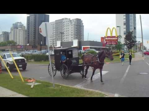 Horse-Drawn Carriage in Waterloo