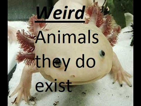 Strange Animals - They Exist