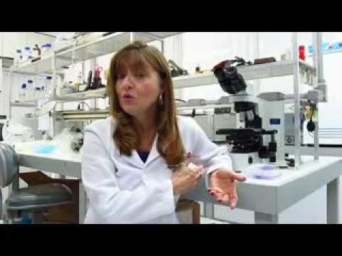 Fatores envolvidos na adaptação de Staphylococcus Aureus resistentes