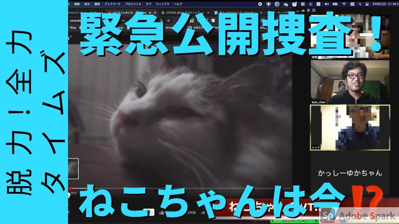 脱力‼️全力タイムズ〜緊急スペシャル!生き別れて四年…国王が愛したねこちゃん公開捜査!