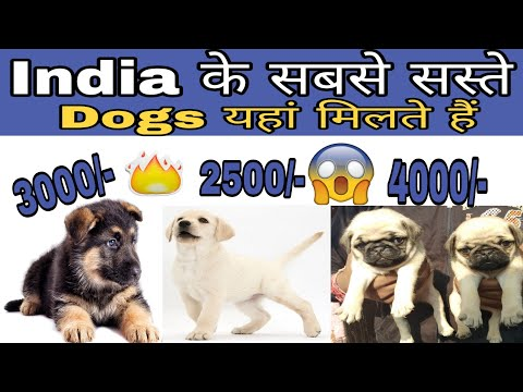 Very Cheap Dog Price list in India 2019 // low price dog price list