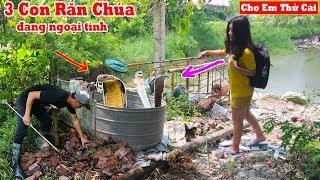 Kinh Hồn Bắt Liền Lúc 3 Con Rắn Hổ Mang Đại Cụ Trong Vườn Nhà Hot Girl Trang Thỏ