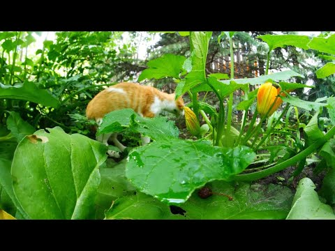 Mr. Sunny Face by Wayne Jones 4k UHD🐈🐱In the garden (Royalty free music - YouTube audio library)