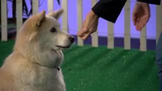 You've Got Victoria Stilwell On Dog Training