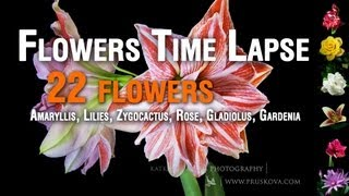 Flowers Timelapse HD (22 flowers)