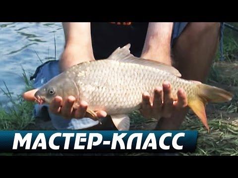 Ловля Карпа Летом на Пруду на различные оснастки. Мастер-Класс О рыбалке всерьёз видео 241.