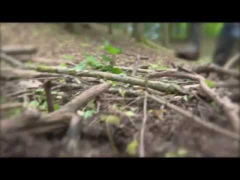 UNI.tv - Batrachochytrium salamandrivorans