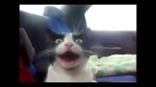 очень смешные видео про животных   котов   собак   подборка  нарезка видео 2015
