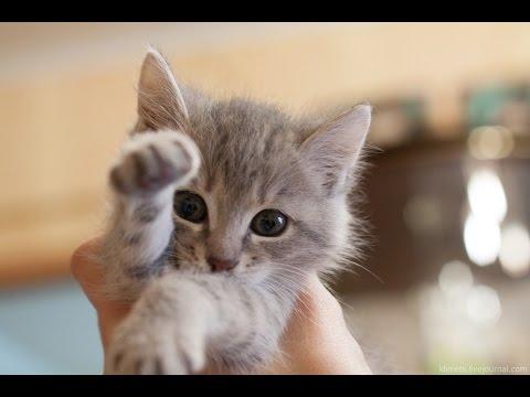 Самые милые животные! / Very cute animals! - YouTube