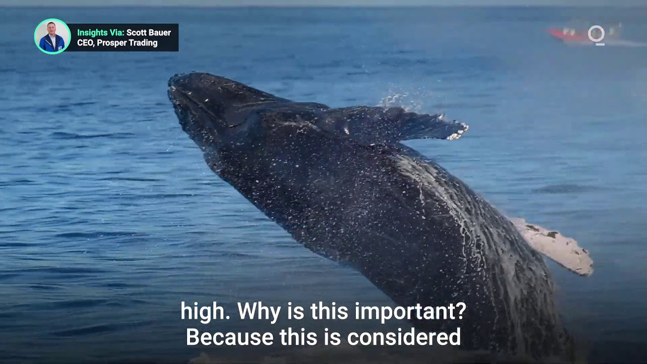 """What Is a Bitcoin """"Whales"""" and Why Investors Should Watch Them?"""