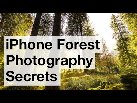Secrets For Stunning iPhone Forest Photos